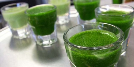 4 wheatgrass shooters on a metal table