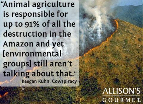 Animal Agriculture destroying 91% of Amazon